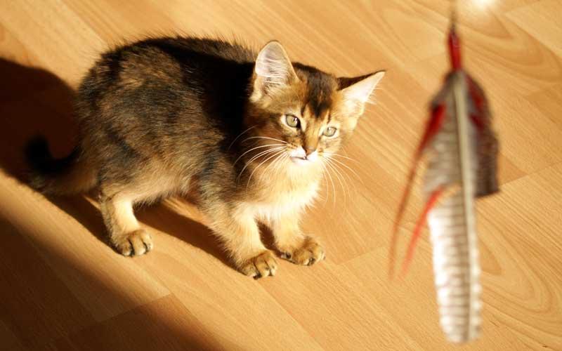 Katzenspiel - DaBird Spielangel für Katzen