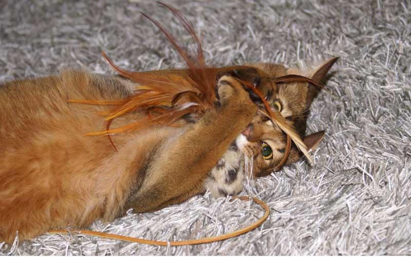 Katzenspielzeug - FlyingRooster