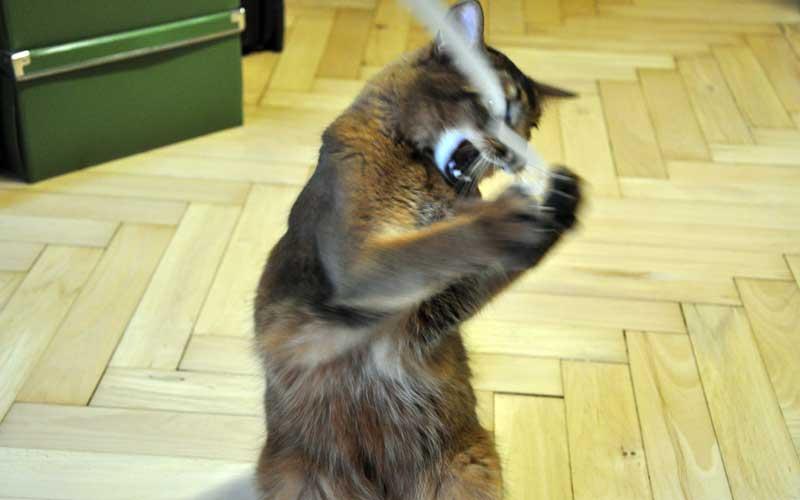 Katzenspielzeug - frei Haus