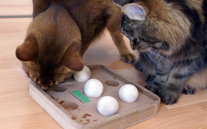 Beschäftigung Für Wohnungskatzen Mit Guten Katzenspielzeug Ideen