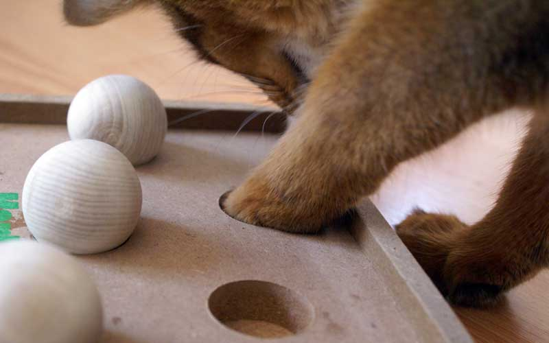 Katzenspielzeug - Kitty Brain Train Boccia Game: Pauli zeigt wie es geht