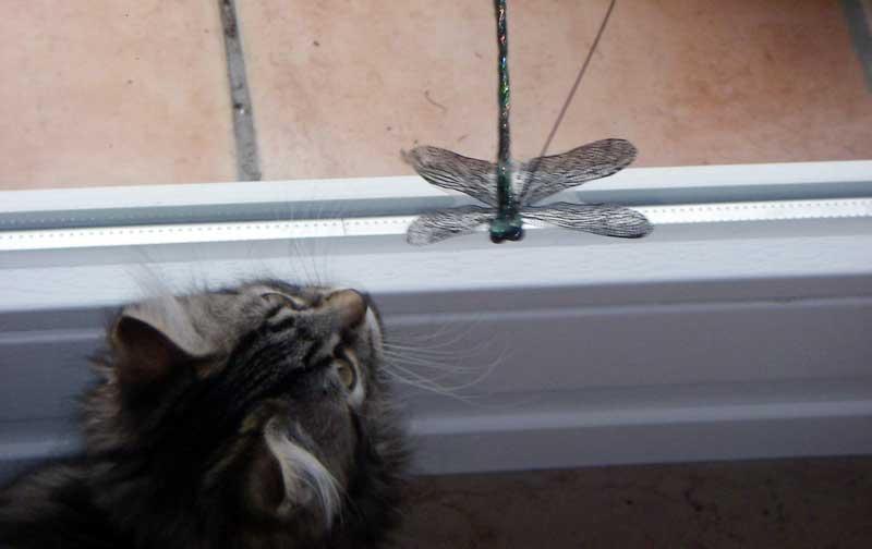 Katzenspielzeug - Libelle