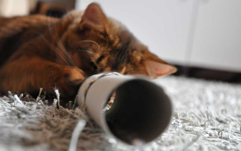Katzenspielzeug selbstgemacht - Pauli's Mauseloch