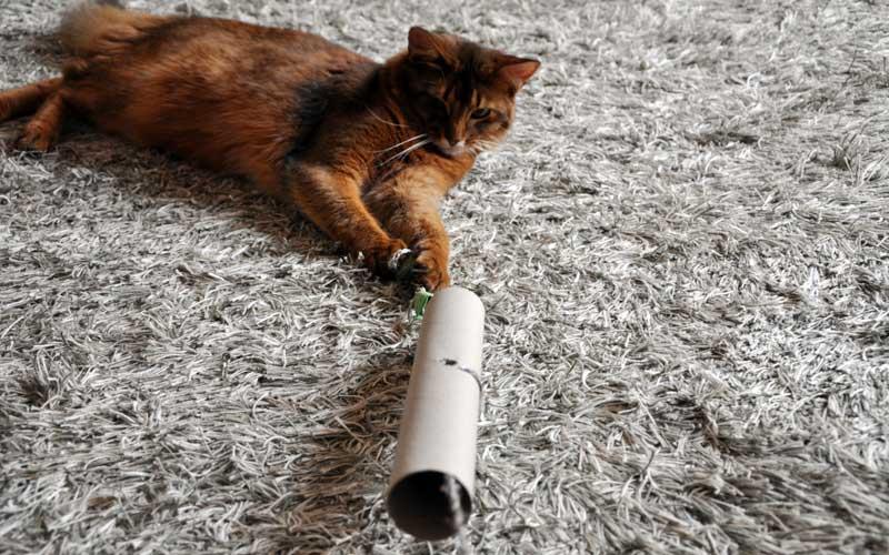 Katzenspielzeug selbstgemacht - Pauli spielt