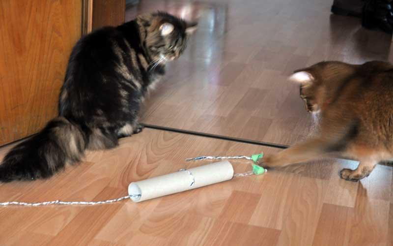 Katzenspielzeug selbstgemacht - Dolly & Pauli spielen mit dem Mauseloch