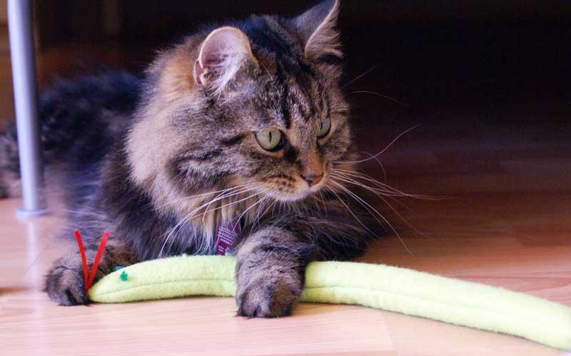 Katzenspielzeug - Minzeschlange