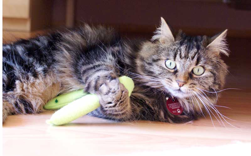 Katzenspielzeug - Dolly kämpft mit der Minzeschlange