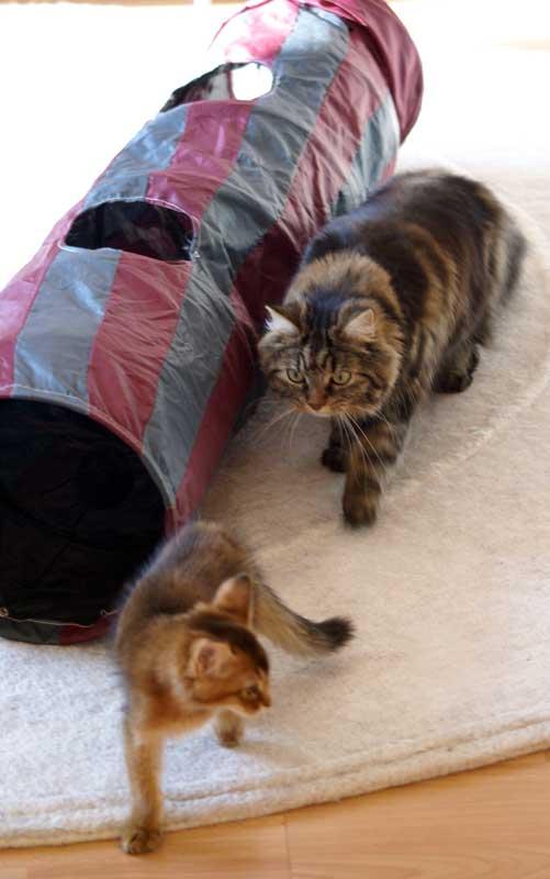 Katzenspiel - Dolly und klein Pauli mit dem Rascheltunnel