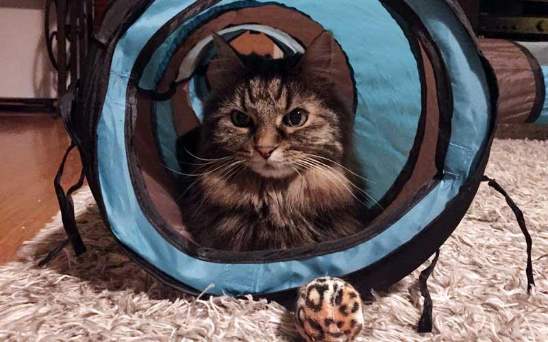 Katzenspiel Rascheltunnelsystem XXL