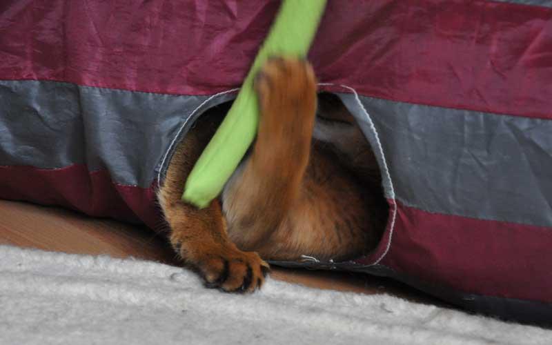 Katzenspiel - Pauli spielt im Rascheltunnel