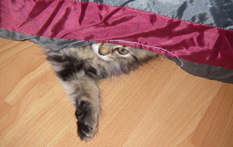 Katzenspiel - Rascheltunnel
