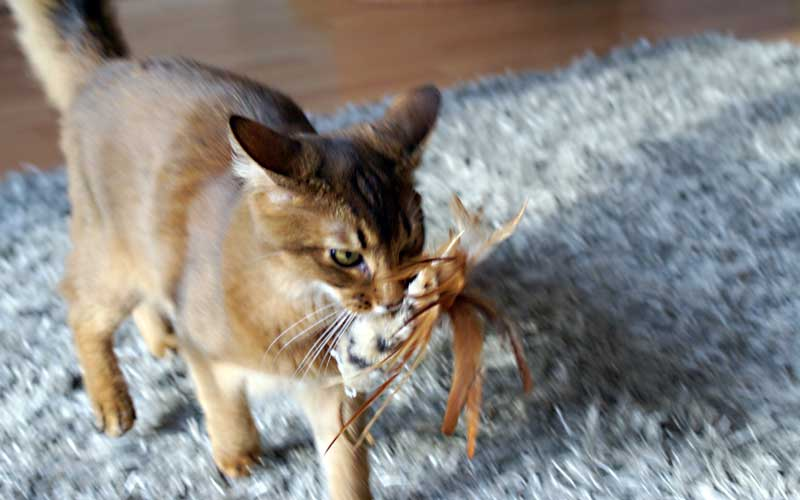 Katzenspielzeug - Rooster
