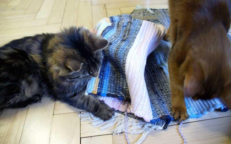 Katzenspiel - Spieleteppich: auch zu zweit ein großer Spaß
