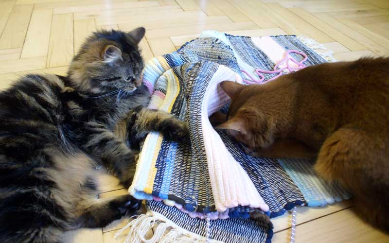 Katzenspiel - Spieleteppich. Dolly und Pauli haben Spaß