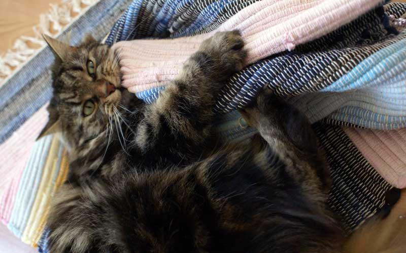 Katzenspiel - Spieleteppich: Dolly tobt sich so richtig aus