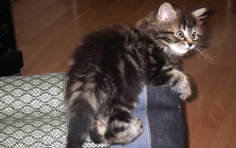 Katzenspielzeug - Thaikissen