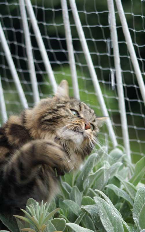 Katzenspiel - Wasserspiele 1