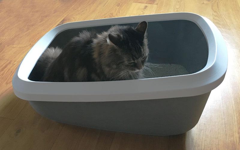 Am besten eine Katzentoilette XXL