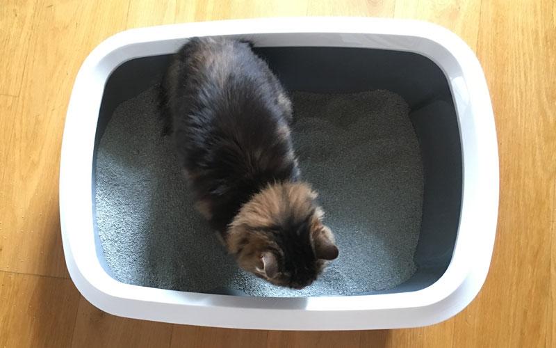 Probleme mit der Katzentoilette