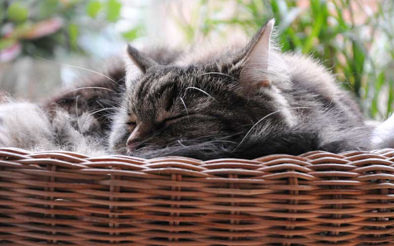 Dolly entspannt im Katzenkörbchen