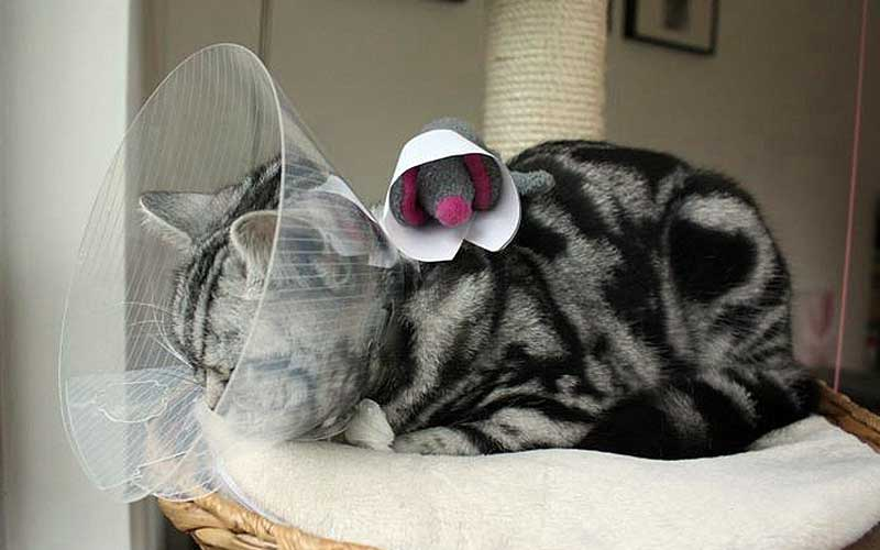 Lotte ist krank / Bild: Undine Zimmer