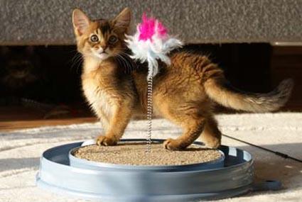 Spielideen und Spielmotivation im Katzenhaltercoaching