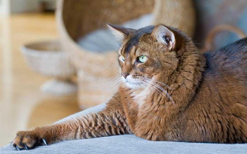 Leben mit Katzen: Mein Kater Pauli