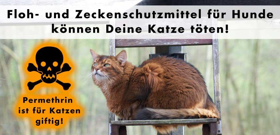 Permethrin ist für Katzen giftig