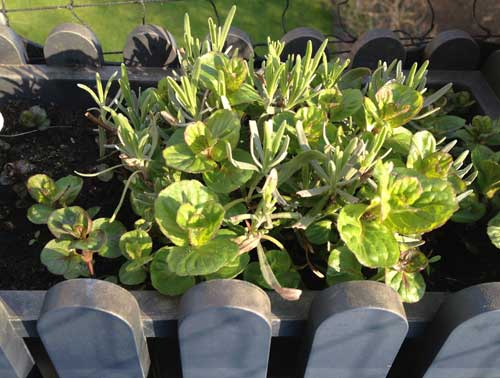 Pflanzen Katzenbalkon