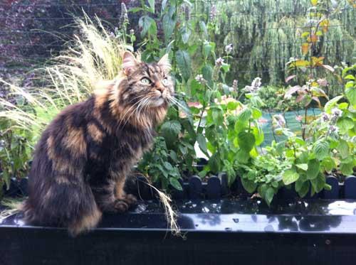Ertfahre im Katzenhaltercoaching wie du deinen Katzenbalkon einrichtest