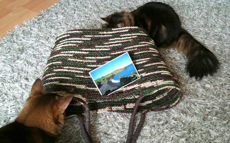 Urlaub für die Katz'