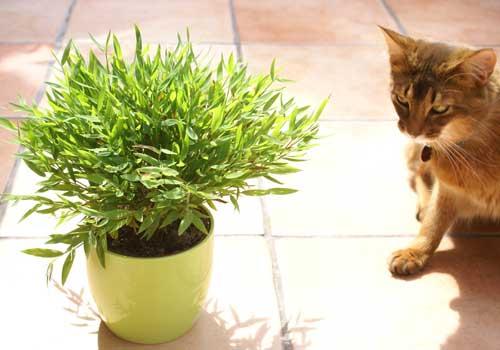 katzenpflanzen f r katzen geeignete pflanzen sorgen f r sicherheit. Black Bedroom Furniture Sets. Home Design Ideas