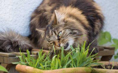 Giftpflanzen – Panikmache oder Leichtsinn im Katzenhaushalt?