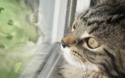 Vergiftungen bei Katzen