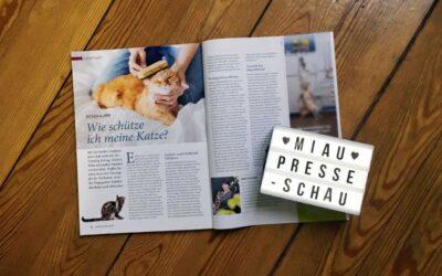 Zecken, Flöhe & Co. – wie schütze ich meine Katze?