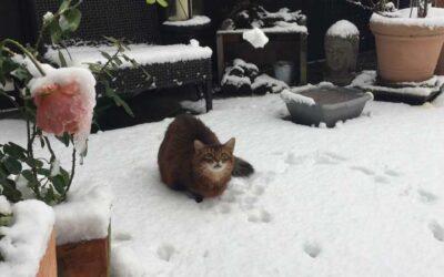 Katzenbalkon im Winter