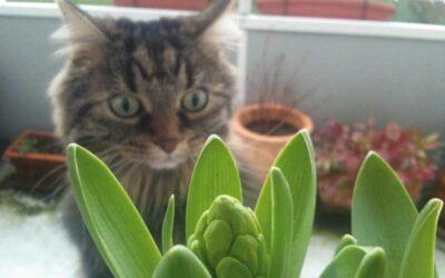 Giftpflanzen – für Katzen giftige Pflanzen
