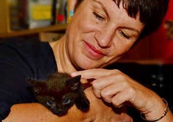 Drei Mal schwarzes Kätzchen – Zuhause gesucht Raum 58640 Iserlohn