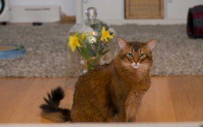 Pflanzen im Katzenhaushalt