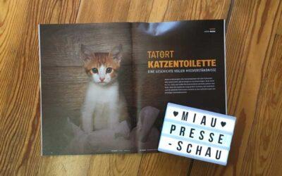 Tatort Katzentoilette – eine Geschichte voller Missverständnisse