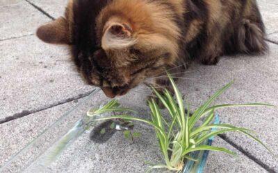 Wasserpflanzen für Katzen