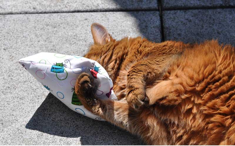 Katzenspiel - Baldriankissen