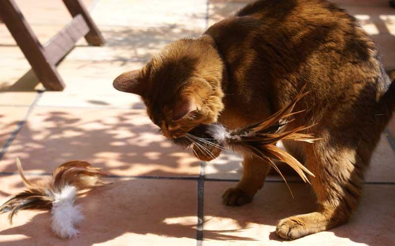 Katzenspielzeug - Fell mit Federn